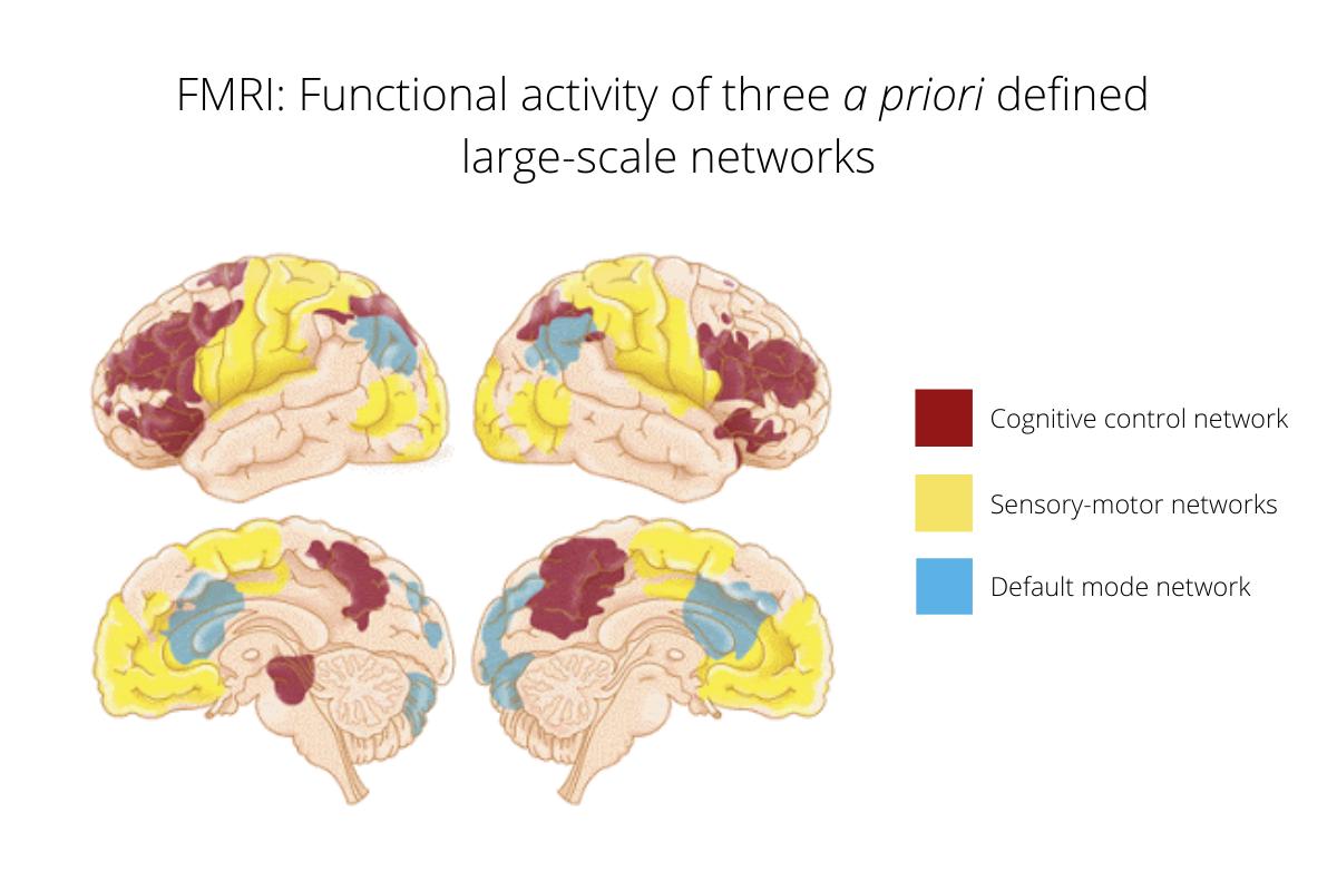 Cognitive control network