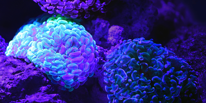 Neurogenesis: Can Psilocybin Help Grow Your Brain Cells?