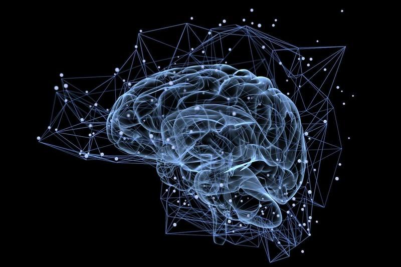 Brain DMN