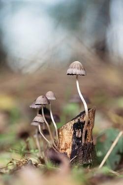 mushroom-1287425_640